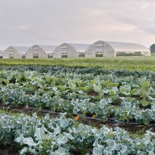 Row Cropping on the Highland Rim Center